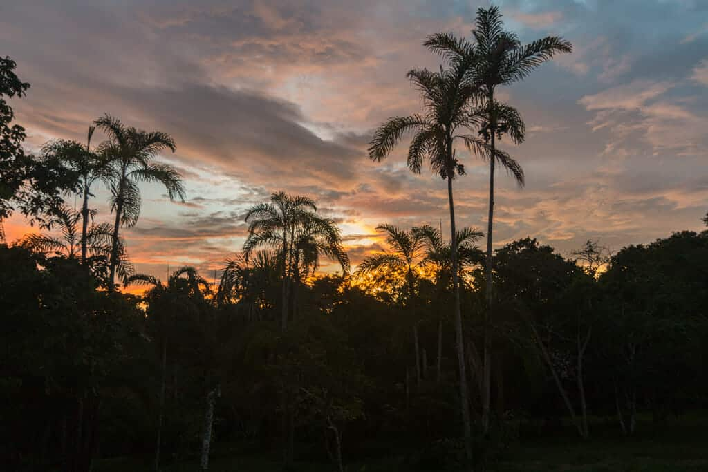 into the wild : sunset over the amazon rainforest